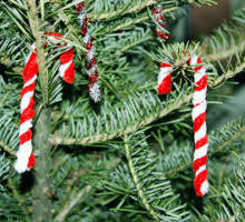 Chenille Candy Cane Craft